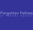 Forgotten Felines